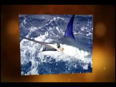Costa Rica Sport Fishing Resorts | Call (888) 995-1507 Today!