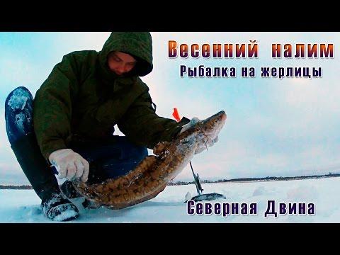 северная рыбалка на налима