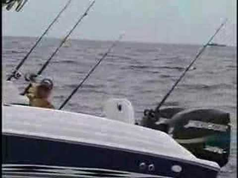 AmberJacks (Reef Donkeys) Offshore Fishing - Sarasota, FL