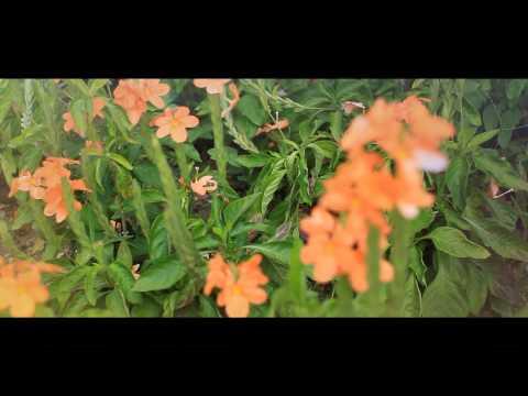Ustaz Manis - Zikir Tasbih (Munajat Rindu) - OFFICIAL VIDEO