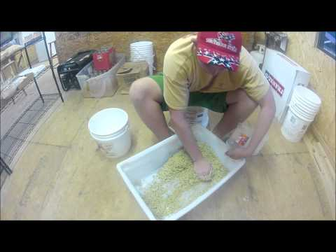 How to make carp bait: Millet