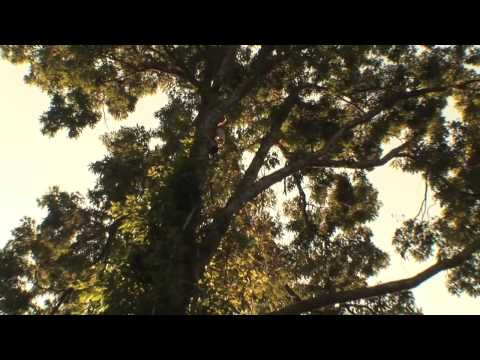 Harper Tree Service Promotional Video