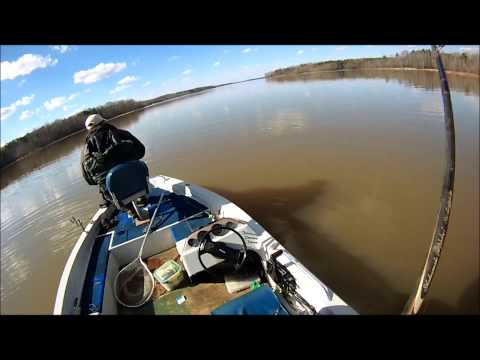 Kerr Lake Striper Fishing