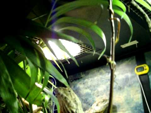 Huge Water Dragon Cage Cagesbydesign How To Save Money