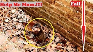 MG! So Pity Poor Lola hurt ,cry call Mom help after fall down| Lola fall cuz he jump wrong