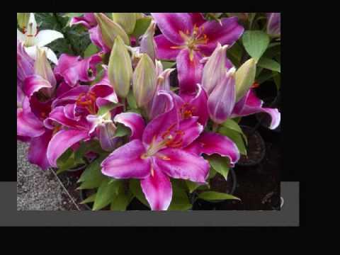 Flores mexicanas 0001 youtube for Plantas decorativas con sus nombres