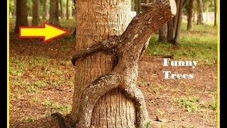 Funny Pictures ! Funny Trees Amazing ! Funny Shaped Plants ! Whatsapp Funny Images ! Amazing Trees