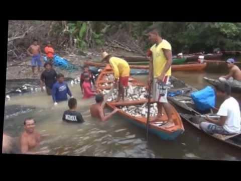 Pescaria Jaraqui - Igarapé Da Vila Do Canumã - Amazonas