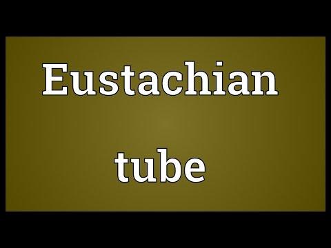 Header of eustachian
