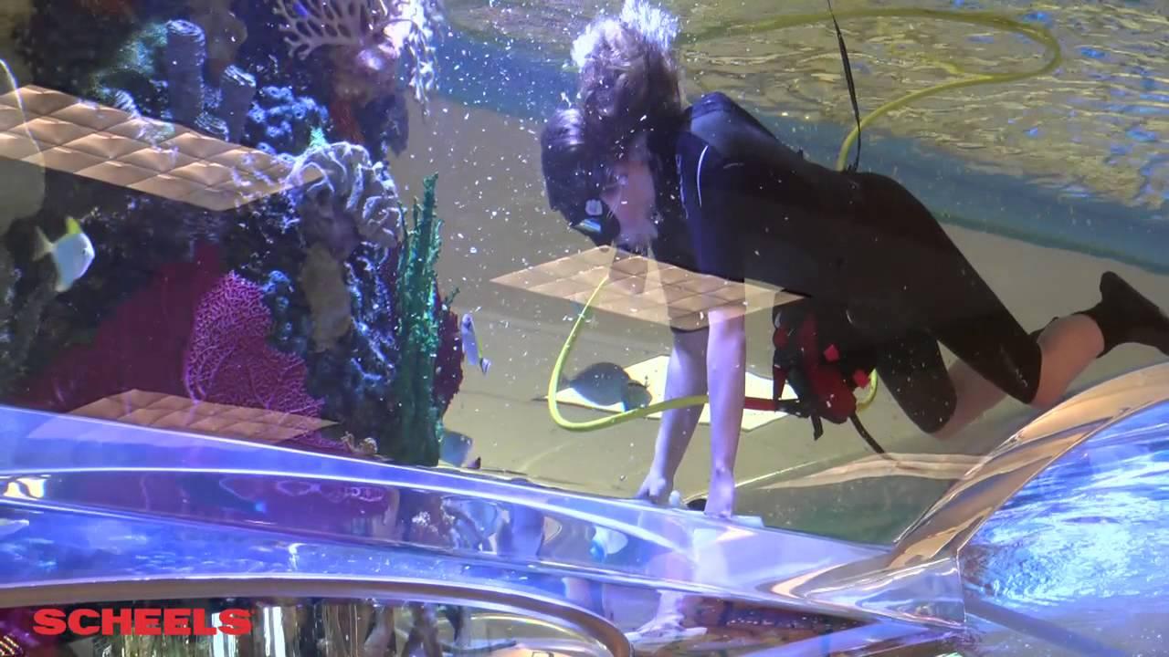 Scheels Behind The Counter Sandy Utah Aquarium Youtube
