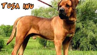 Top 10 Strongest Dogs in the World 🐕