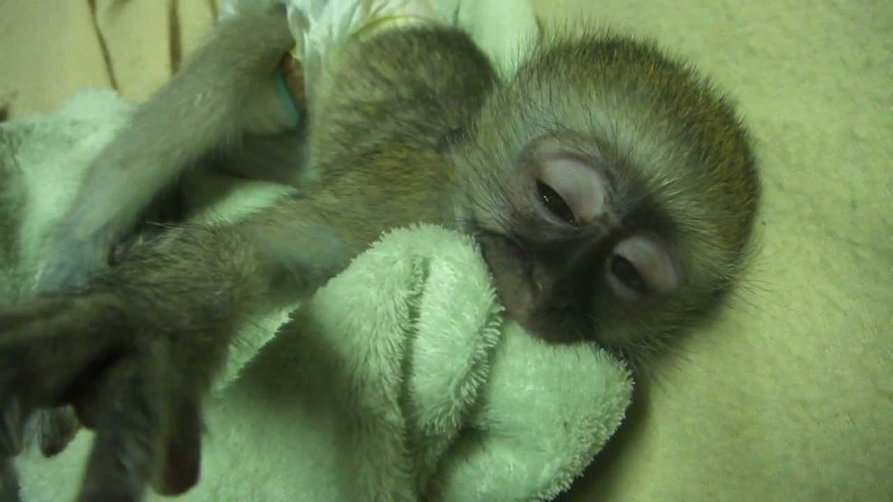 Cute night monkey - photo#25
