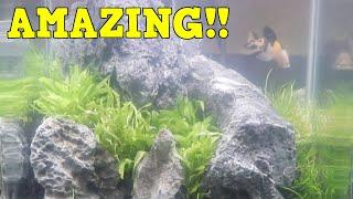 "Aquascaping a Nano Tank With Chris Lukhaup ""The Shrimp King"". Dennerle Nano Tank"