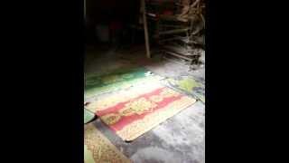 madhobilota ami,ami kanon bala by little girl-nice bangla song