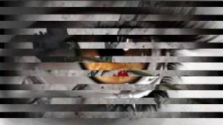 Vídeo 37 de Wagner Roberto