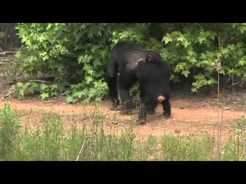 Experience Chimp Haven