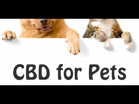 HEMP-BASED CBD FOR HUMANS AND PETS Dr Rob Streisfeld HEMPMEDS