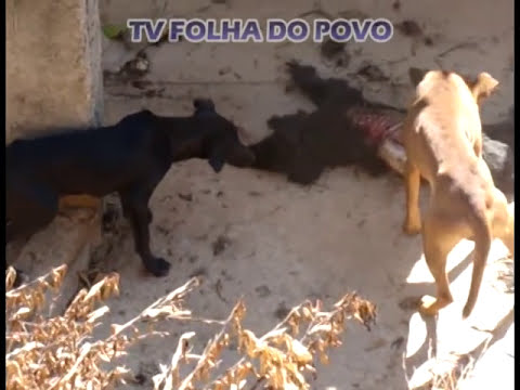Animais passam fome e praticam canibalismo por irresponsabilidade da ONG