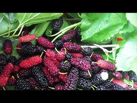 Wild Berries Hunt In Yokohama