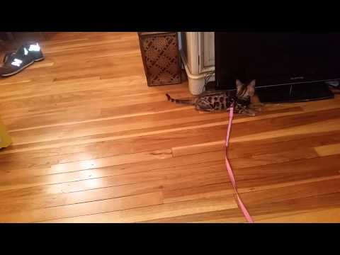 best carpet for cat owners