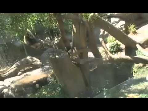 2013-07-18 Wu Knew that Pandas grow on Trees?