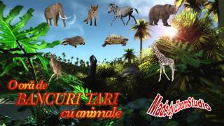 O ORA DE BANCURI TARI CU ANIMALE