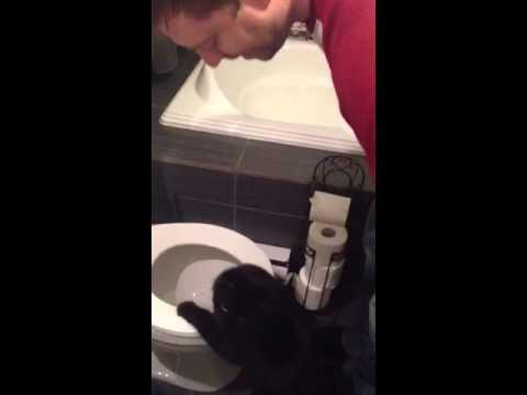 Mon chat, lendemain de veille, qui m'empêche d'aller à toilette-Alex Roy