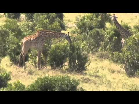 Kenya/Tanzania safari by Bill Bogusky Part 1 of 3