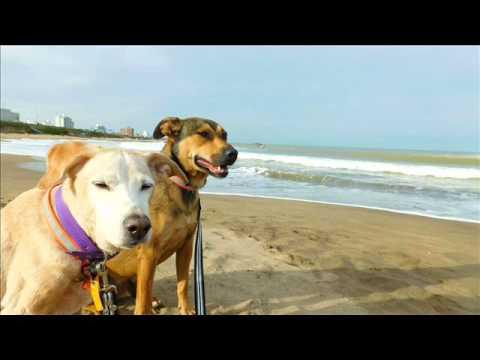 Argentina con mis perros en radio chubut