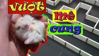 Tony | Cuộc Thi VƯỢT MÊ CUNG Uống PEPSI Siêu Hài Hước | Hamsters Overcome The Labyrinth