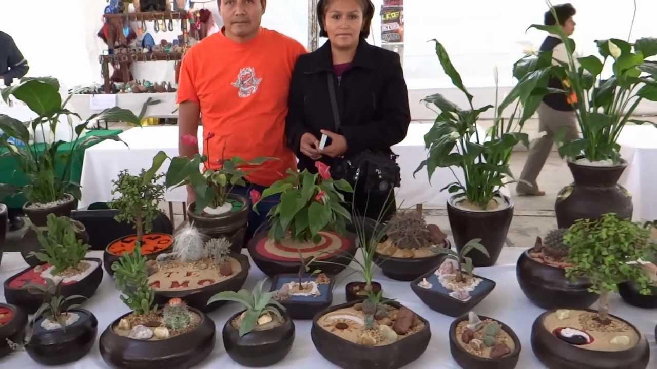 Almario cactus decoraciones naturales youtube - Centros de plantas naturales ...