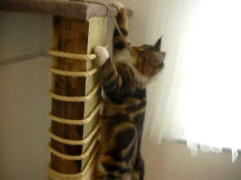 Climbing Cat. DIY Scratch Post. climbing frame