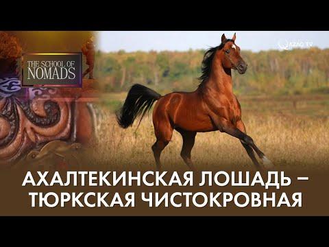 Школа кочевников №6. Ахалтекинская лошадь - тюркская чистокровная