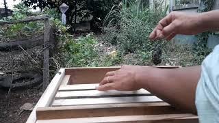 """Hướng dẫn nuôi ong  ổn định đàn ong mới bắt về nhanh chóng và hiệu quả """"săn bắt đồng nai """""""