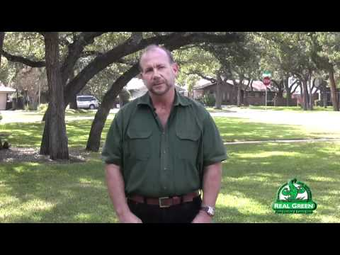 Chinch Bug Identification and Treatment