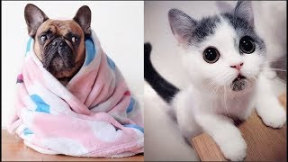 Cute baby Animals Videos Compilation 2019