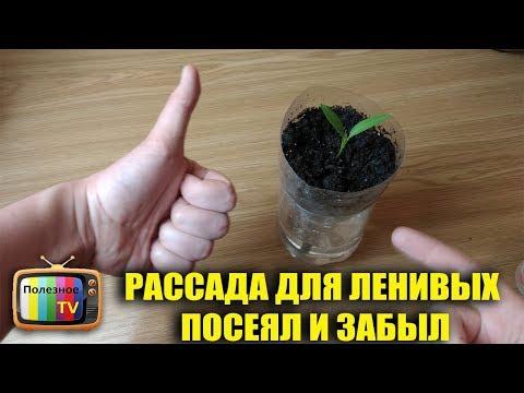 """Томаты по """"ЛЕНИВОЙ"""" технологии – посадка и уход от А до Я"""