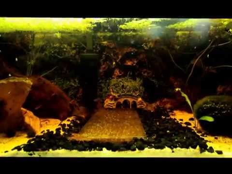 20 Gallon Freshwater Aquarium W  Dwarf Lobster, Shrimp, Fish, Baby Guppies, Live Plants &amp  Duckweed