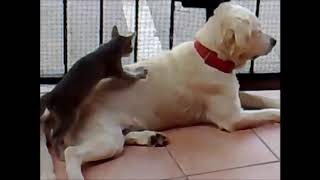Funny Cat Videos, Funny Dog Videos, Best Funny Animals 20142