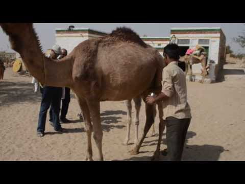 Rajasthan Tour - Jaisalmer Desert Safari Expedition