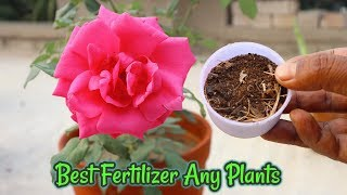 How To Use Dried Banana Peels As a Fertilizer For any plants || Never Throw Away Banana Peels