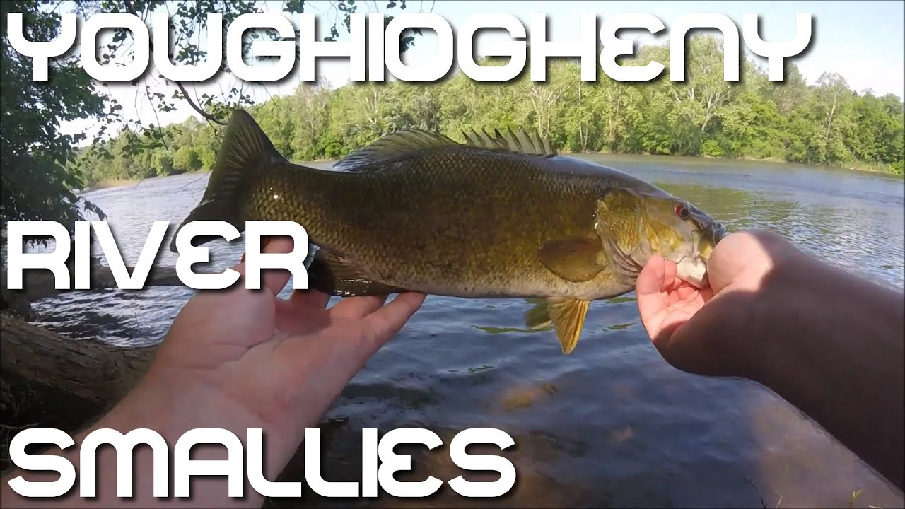 Smallmouth bass fishing youghiogheny river pa fishing cave for Pa out of state fishing license