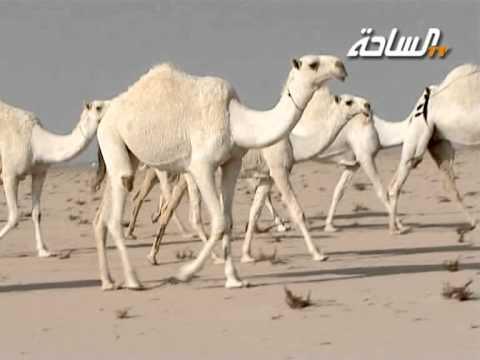 منقية صاحب السمو الأمير فهد بن عبدالله بن محمد بن عبدالرحمن آل سعود (الوضح)