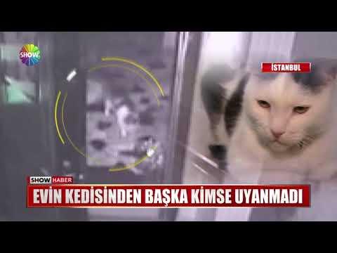 Evin kedisinden başka kimse uyanmadı