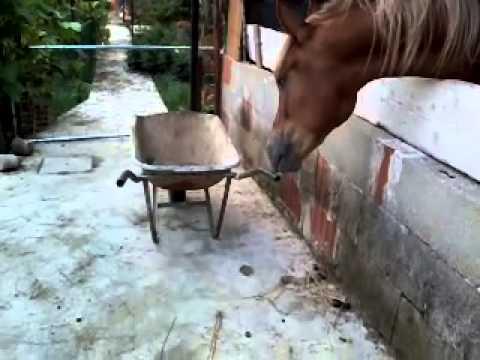 Cavallo Trasgressivo video