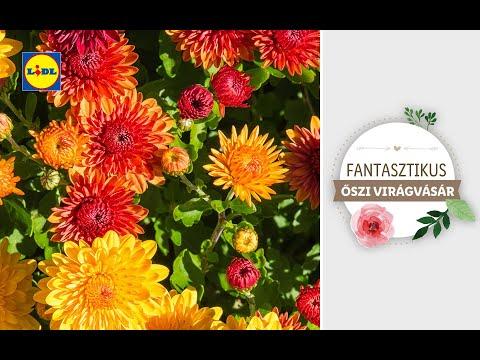 Fantasztikus őszi növényvásár 10.03-tól | Lidl