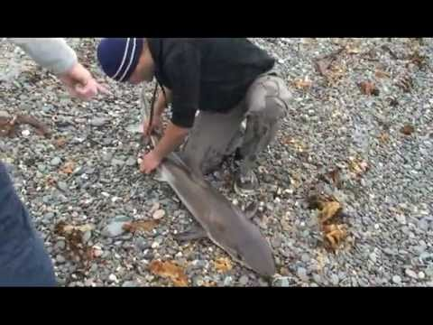 Beach Shark Fishing UK
