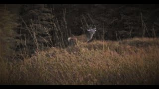 Red Stag Stalking in Scotland