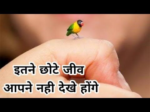 Most Amazing Tiny Animals In The World.[HINDI]