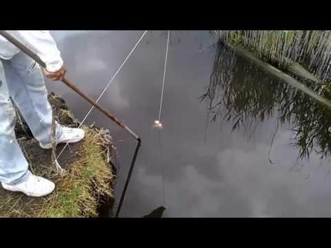 Pescando Jaibas